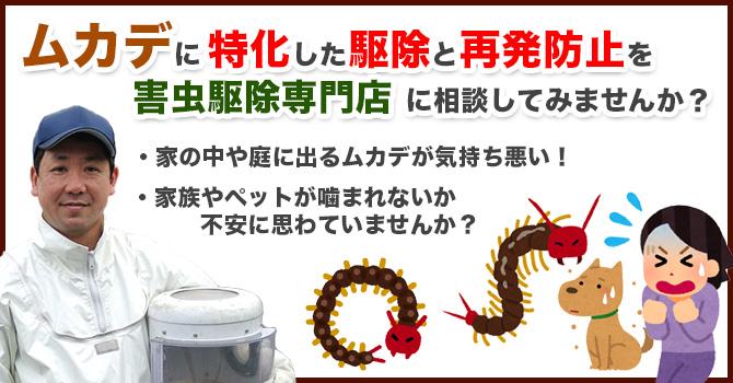 ムカデに特化した駆除と再発防止を害虫駆除専門店に相談してみませんか?